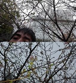 2016-11練馬桜-255.jpg